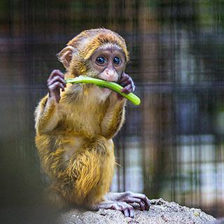 Bewusst und achtsam essen